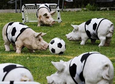 Ảnh vui: Siêu lợn tranh bóng