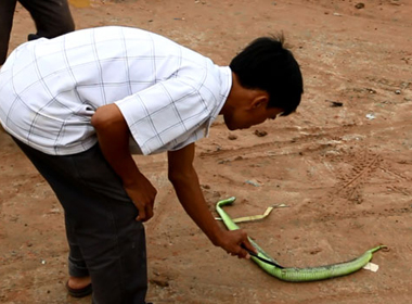 Đà Nẵng ra công văn khẩn phòng chống rắn lục đuôi đỏ