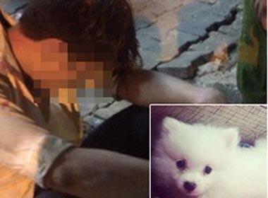 Trộm chó của bạn thân còn nhắn tin hỏi thăm, nam thanh niên bị 'vạch mặt'