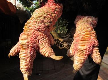 'Choáng' với cặp 'chân rồng' con gà Đông Tảo giá 1 cây vàng SJC