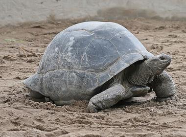 6 loài động vật 'cao tuổi' nhất thế giới