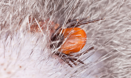 Những căn bệnh lây từ động vật sang người gây tử vong