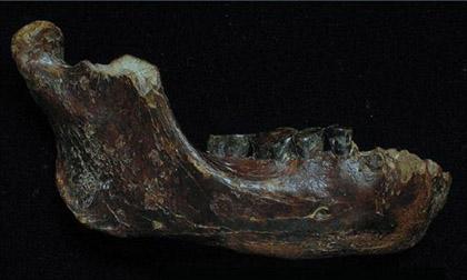 Phát hiện hóa thạch của người cổ đại 200.000 tuổi dưới biển Đài Loan