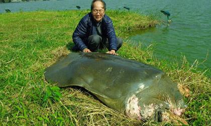 Thực hư thông tin cụ rùa hồ Gươm vừa qua đời