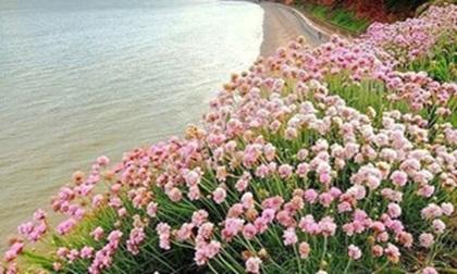 25-xahoi.com.vn-w420-h252