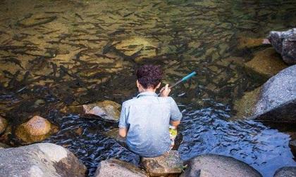 Dòng suối kỳ lạ ở Thái Lan, cá bơi cả đàn bên dưới nhưng không ai dám bắt