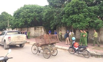 Bắt giữ đàn chó cắn chết bé trai tại Hưng Yên