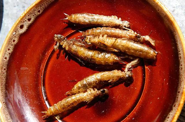 6 loại côn trùng có độ an toàn cao nhất cho người ăn - 2