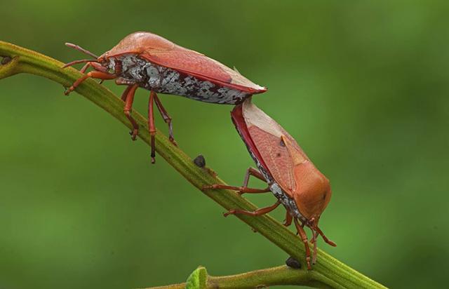 6 loại côn trùng có độ an toàn cao nhất cho người ăn - 6