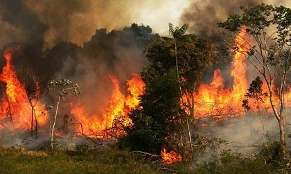 'Lá phổi của hành tinh' - rừng Amazon chìm trong biển lửa