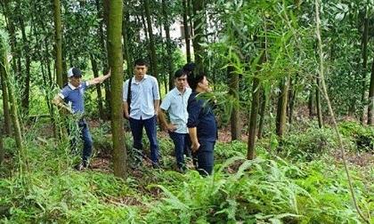 Phó chủ tịch xã tử vong bất thường trong rừng