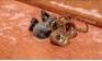 Rợn người phát hiện loài ký sinh trùng lạ chui ra từ con nhện
