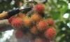 Dân văn phòng bán trái cây 'xách tay' kiếm chục triệu mỗi tháng không lo đóng thuế