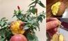 Cú lừa thế kỷ: Mua táo bonsai chưng Tết éo le lại nở ra hoa dâm bụt