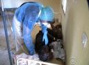 Dịch Ebola: Phát hiện người nhiễm virus 'tử thần' ở Senegal
