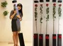 Hoa hồng dài 1,6 m giá 700.000 đồng
