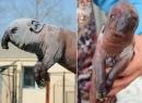 Phát hiện sinh vật kỳ dị có thân lợn, đầu voi gây xôn xao