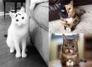 20 chú mèo nổi tiếng nhất trên internet (P1)