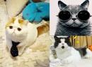 20 chú mèo nổi tiếng nhất trên internet (P2)