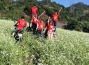 Phượt thủ chạy xe máy tàn phá đồng hoa cải khiến cư dân mạng xôn xao