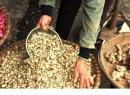 Rắn lục đuôi đỏ xuất hiện nhiều làm giá củ nén tăng đột biến