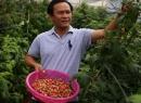 Khá lên nhờ nuôi trồng hàng độc: Mâm xôi lên đời