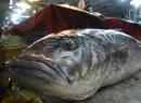 Bắt được cá lạ nặng hơn 50kg ngoài khơi Trung Quốc