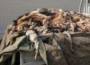 Kinh hoàng lồ giết mổ chó để sản xuất găng tay da ở Trung Quốc
