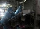 Phát hiện ổ dịch cúm A/H5N1, A/H5N6 ở Quảng Ngãi