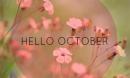 Dự báo tháng 10 đầy thuận lợi cho 12 cung Hoàng đạo