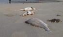 Chính thức kết luận nguyên nhân cá chết hàng loạt