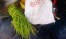 Hàng tấn rau muống ngâm hóa chất nhuộm lên bàn ăn người Sài Gòn mỗi ngày