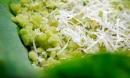 Những món ngon – độc – lạ nên ăn dịp 30/4 và 1/5 tại Cao Bằng