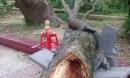 Bị cành cây xà cừ rơi vào người, nữ phó hiệu trưởng tử vong trong sân trường