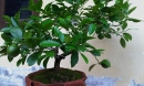 Đây chính là những loại cây sinh tài lộc mà gia đình nào cũng nên trồng ngay để phát tài
