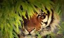 Con hổ 'quỷ dữ' giết 430 người, khủng khiếp nhất châu Á