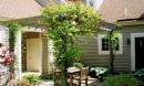 Đừng bao giờ trồng cây này trong nhà để tránh điềm gỡ, vận đen kéo đến, gia đình hay bất hoà