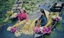 'Dấu ấn Việt Nam': 12 mùa hoa rực rỡ sắc màu