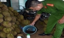 Tẩm hóa chất vào hàng tấn sầu riêng để chuyển ra Hà Nội bán