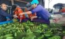 Thu nghìn tỷ từ chuối, chanh dây, bầu Đức trồng cả ớt và hồ tiêu