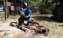 Khí độc khiến 4 người nhập viện, vật nuôi chết la liệt ở TP.HCM nguy hiểm cỡ nào?