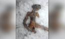Xôn xao tìm thấy thi thể người ngoài hành tinh bị đóng băng ở Nga
