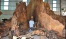 'Báu vật' giá siêu khủng: Gốc bàng cổ kỳ bí 600 năm giá 35 tỷ đồng