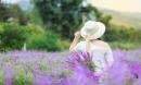 Ngẩn ngơ sắc tím oải hương tại thung lũng hoa ở cao nguyên Lào Cai