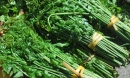 Không ai ngờ loại rau mọc hoang lại có giá trị trường thọ?