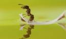 Cứu 1 con kiến trên sông và mơ giấc mơ lạ , 10 năm sau, người đàn ông bất ngờ được trả ơn