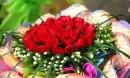 Loại hoa nên tặng thầy cô giáo trong ngày 20/11 bạn nhất định phải biết