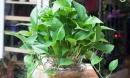 Đây chính là cây trồng trong nhà sẽ loại bỏ mọi khí độc và giúp bạn có cơ thể khỏe mạnh, giấc ngủ ngon