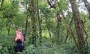 Lạc vào rừng nguyên sinh như miền cổ tích, không muốn rời nửa bước
