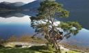 Nhìn là muốn đến ở ngay những ngôi nhà trên cây đẹp ngoạn mục này!